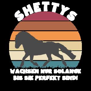 Shettys wachsen nur solange bis sie perfekt sind