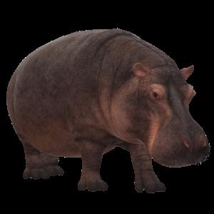 3D Nilpferd