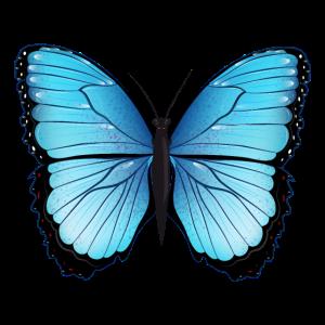 blauer Schmetterling handgezeichnet und koloriert
