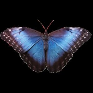 Biodanza-Schmetterling