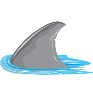 Hai in Sicht! Haifischflosse im Meer