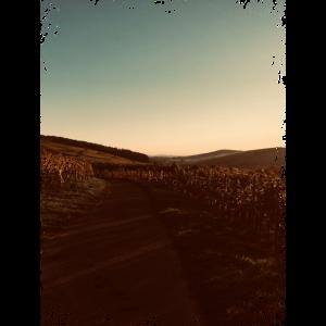 Sonnenuntergang in de Rebe