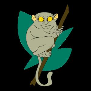 Koboldmaki