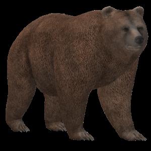3D Bär