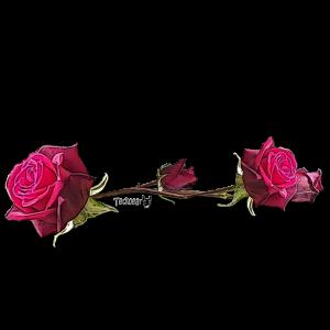 Jede Rose