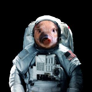 Schwein im Weltall