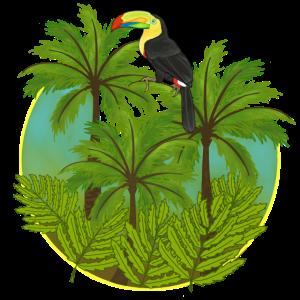 Dschungel, Tukan, Urwald