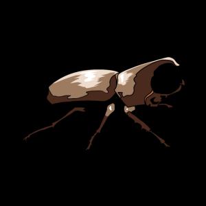Insekt Insekten Ökologie Natur Wildtiere