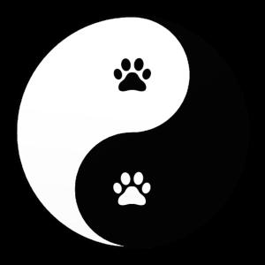 Yin Yang YOGA KATZE