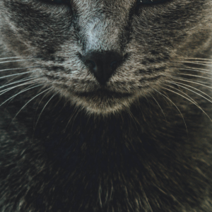Lustiger Mundschutz - Katzen Gesicht Cat Face