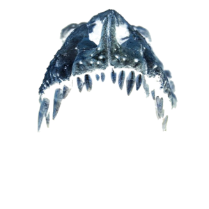 T-Rex Maul