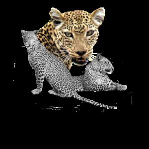 Leopard - Raubkatze - Katze - Afrika - Safari
