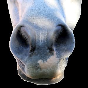 Pferd Nüstern Pony Nase Tier Esel Nasenlöcher Maul