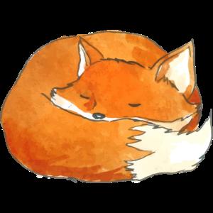 Foxy sleeping