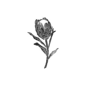 Linocut Protea Protea