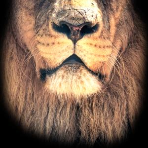 Löwenmaske
