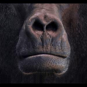 Mundschutz Affe Gorilla Schutzmaske Corona lustig