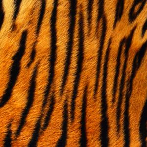 Tiger Print Maske