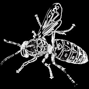 insekten - natur - tiere - tier - insekt - lustig