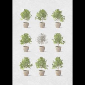 Natur Baum Wachstum