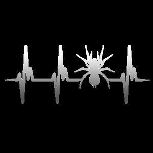 Herzschlag Spinne