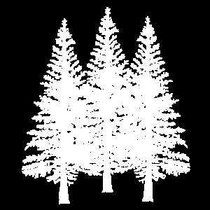 Wald Baum Bäume Natur Naturschutz Flora Ökologie
