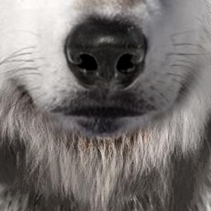 Wolf Gesichtsmaske Rudeltier Maske Schnauze
