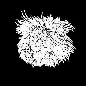 Löwe ACHTENKAS