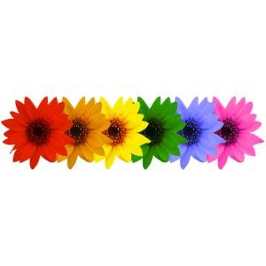 colori fiori di girasole girasole sun sun