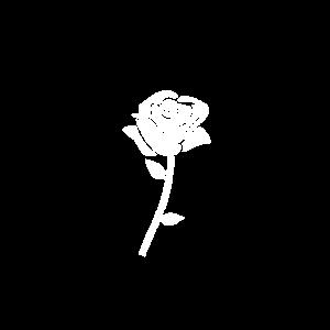 Rose, white rose, blume, rosette, flower, little