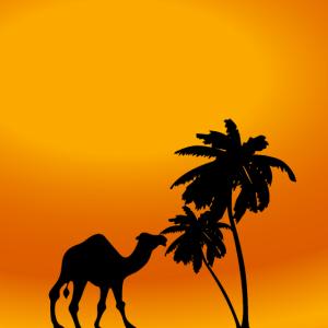 kamel, palme, wüste