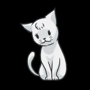 Katze Haustiere Katzen Kitten