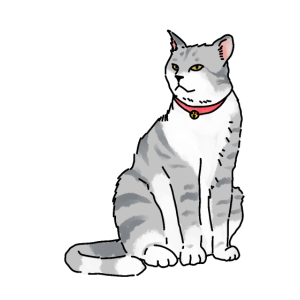 Katze Katzen Haustiere Schnurren