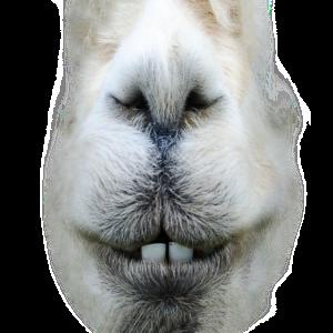 Alpaka! Sei kein Kamel. Sei Alpaka.