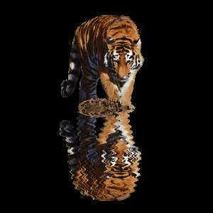 Tiger Reflexion