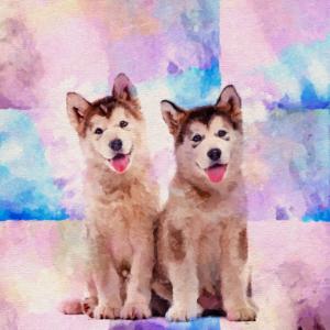 Alaskan Malamute Welpen - Pastellfarben