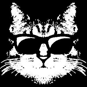 coole Katze mit schwarzer Sonnenbrille Stubentiger