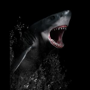 Großer weißer Hai. Hai