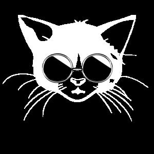 katze mit sonnenbrille, cat with sunglasses