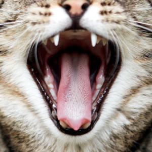 Katzenmaske - Katzengesicht