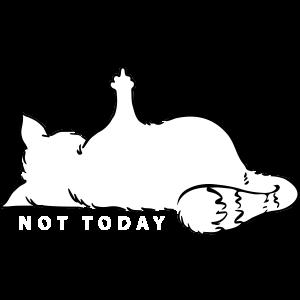 Katze Mittelfinger Not Today Nein Katzenliebe Nö