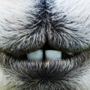 Mundschutz BEDRUCKT Alpaka Maske