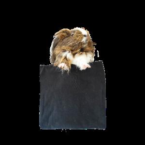 Meerschweinchen in der Tasche