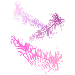 rosa Federn