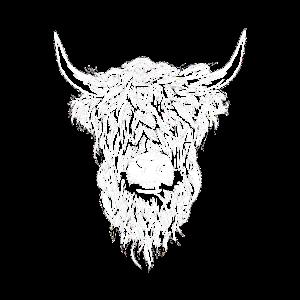 Hochlandrind Hochland Rind Highland Cattle Kuh