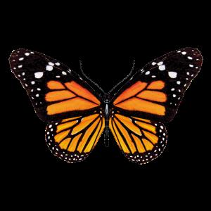 Schmetterling, Falter, Butterfly