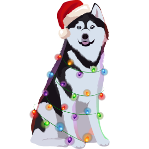 Siberian Husky Hund Lichterkette Weihnachten