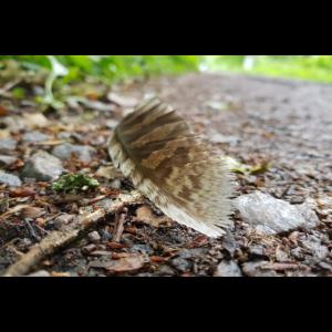 Vogelfeder im Wald