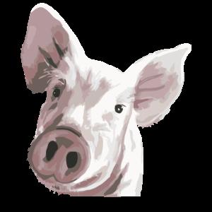 Baby Pig Animal Portrait