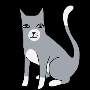 Katze Katzen Kitten Haustiere